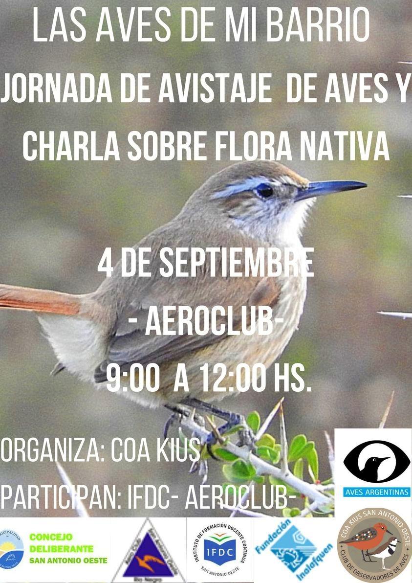 Aves-de-mi-barrio-30-8-21.jpeg